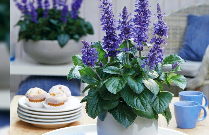 Pflanze des Jahres: Trendsetter nicht nur für Bienen