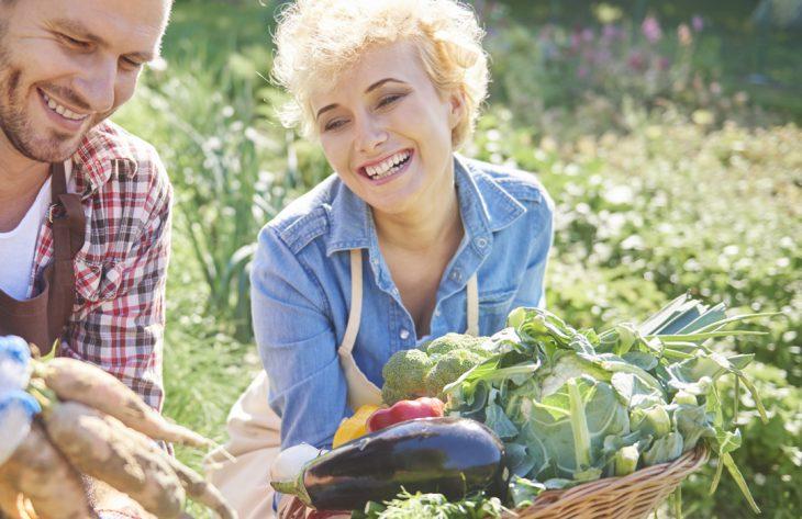 Veredeltes Gemüse: Tomaten und Gurken